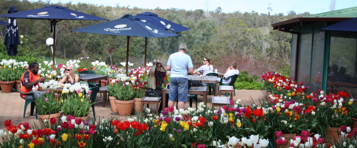 Melville Nurseries & Rose Heritage Cafe