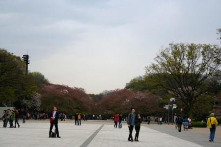 Ueno Park Tokyo Jepang Hanami